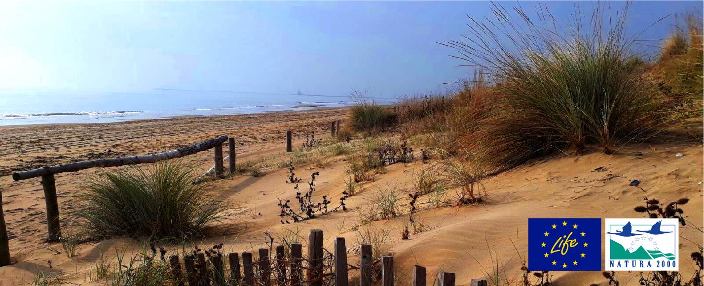 5/8/2020 | Progetto Life REDUNE sul Litorale Veneto, per ristabilire e mantenere l'integrità ecologica di 5 habitat dunali sulla costa.